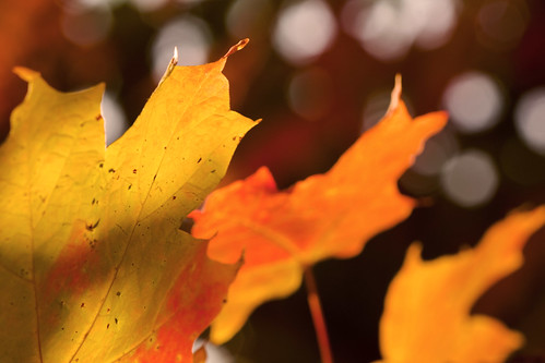 Autumn and Bokeh by jgunzz1024