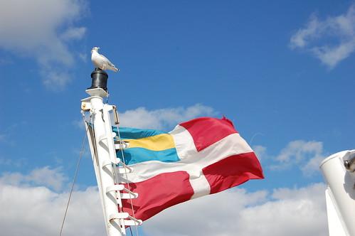 Flag and gull
