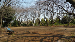 熊野神社市民の森(天神平広場)(Tenjindaira Square at Kumano Shrine Community Woods)
