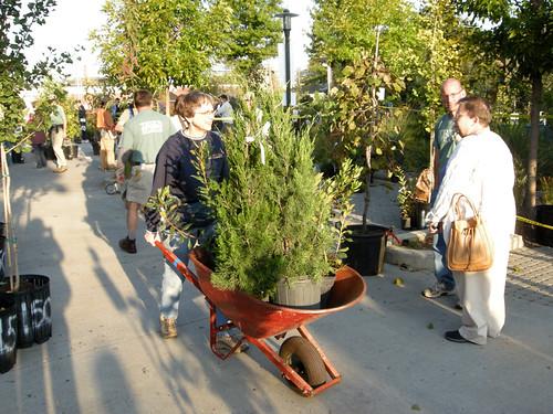 tree sale 2