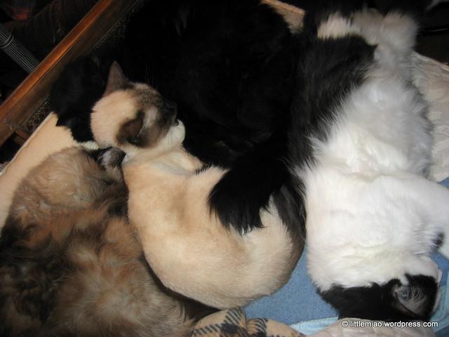a density of miaos 11-7-2011 9-04-02 PM