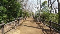 熊野神社市民の森(長命通り)(Chomei Ave., Kumano Shrine Community Woods)