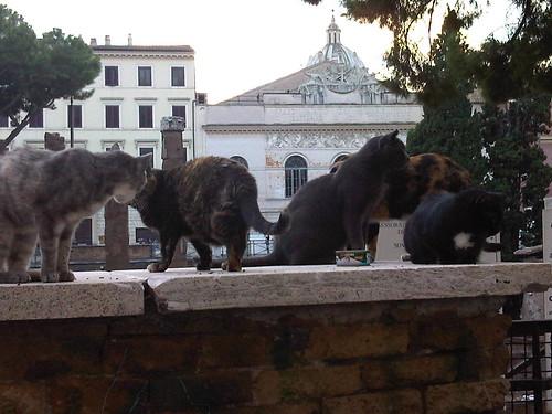 Pussycats near Palazzo Grazioli