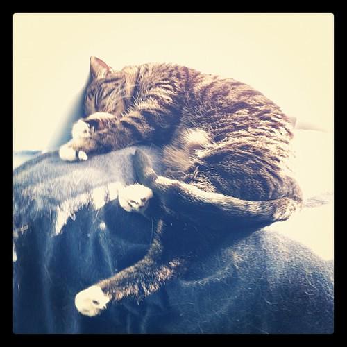 Sunny cat nap