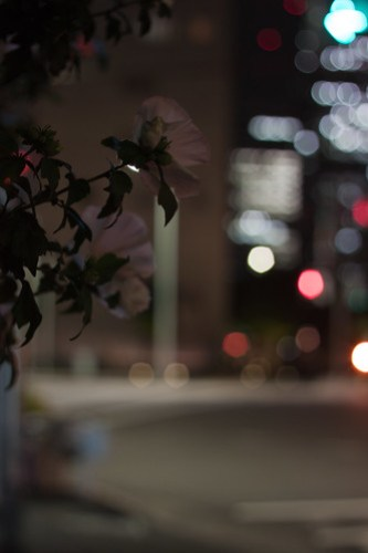 Flower in the city