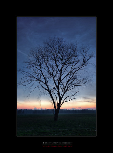 Archives_2005_to_Present #170 - Dawn Upon a Lone Tree by kuantoh