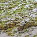 beach @ low tide
