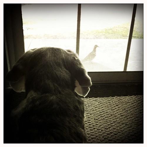 Sam vs. A Sad Little Pigeon by Big Blue Mess