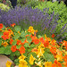 Edible, ornamental, fragrant plantings @ Sunset Magazine Trial Gardens