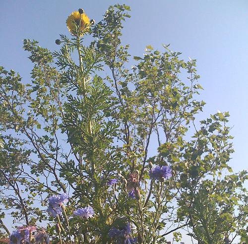 den højeste blomst på altanen