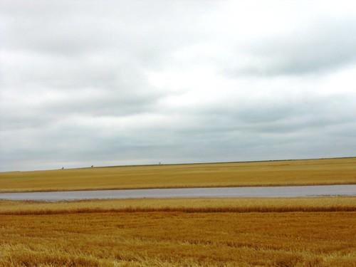 Lake in field