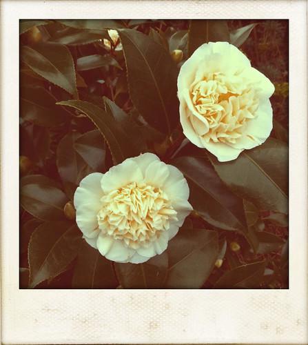 Winter Blossom 1