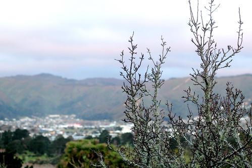 Saturday: soft tree soft hills
