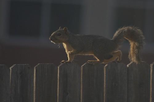 07.21.2011 Squirrel!!!