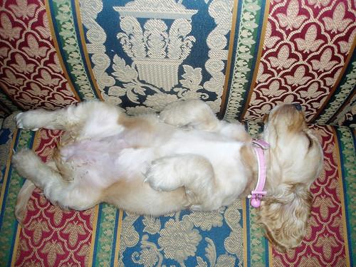 puppy snooze