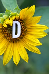 D is for _______________