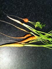 Tiny carrots!!