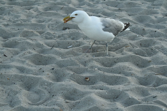 grabbing a snack