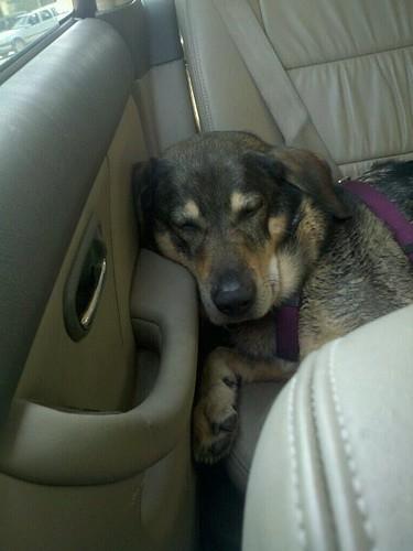 sleepy reggie.jpg