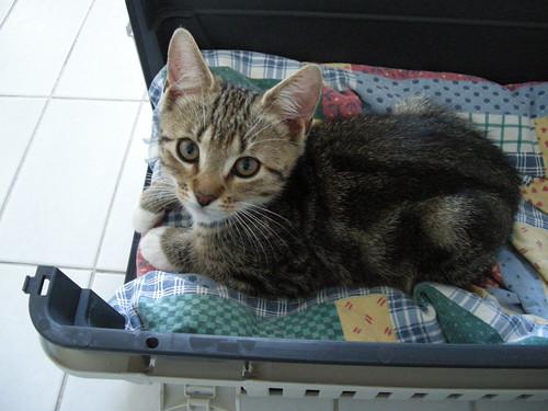kissojen eka päivä 3.8.2011 001