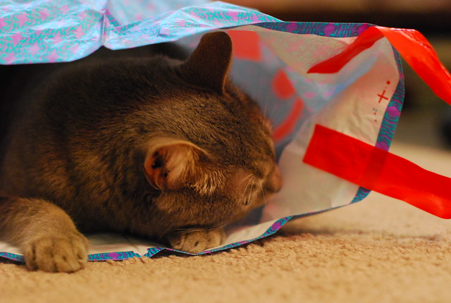 photos of a cat in a bag: a series