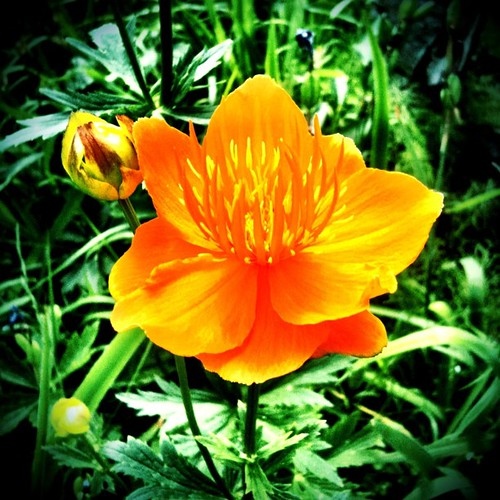 #luscious #orange #flower !!! I'm in love with it!