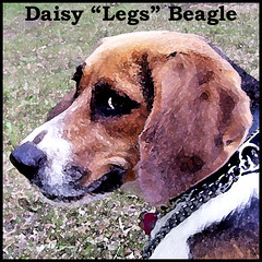 Daisy Blog Photo