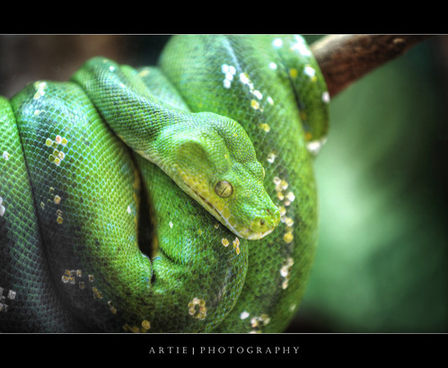 tree green photoshop canon rainforest australia wideangle... (Photo: :: Artie | Photography :: Travel ~ Oct on Flickr)