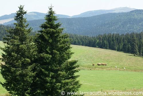 D-79219 Staufen 9_2011 07 12_4866
