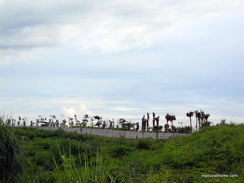 Venare, Nuvali Aug2011 (5)