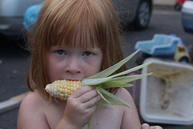 Tabby tastes the corn