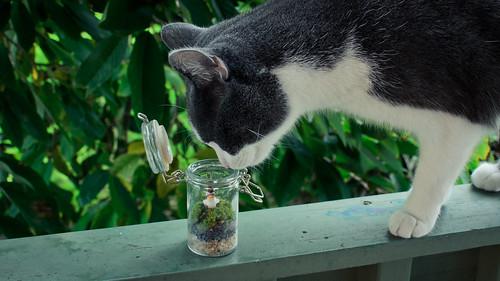Mizu likes to terrarium
