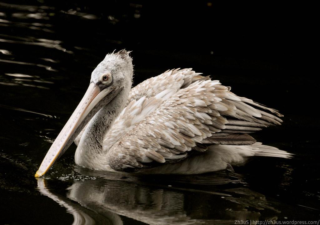 Jurong Birdpark (49 of 89)