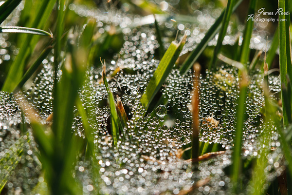 Dew drops in the early morning grass.