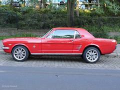 MustangDSC00668