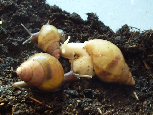 snails 015