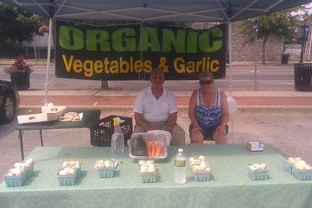 Vincent Cirasole's Organic Garlic at the Copiague Farmer's Market