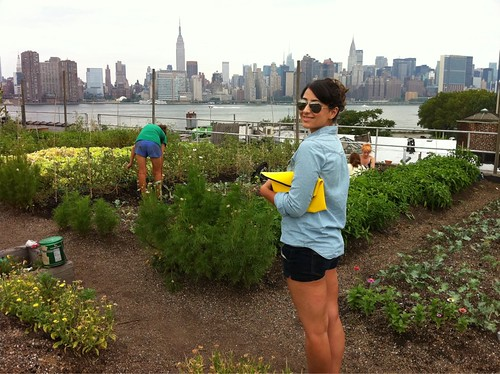 Eagle Street Rooftop Farm in Greenpoint, Brooklyn