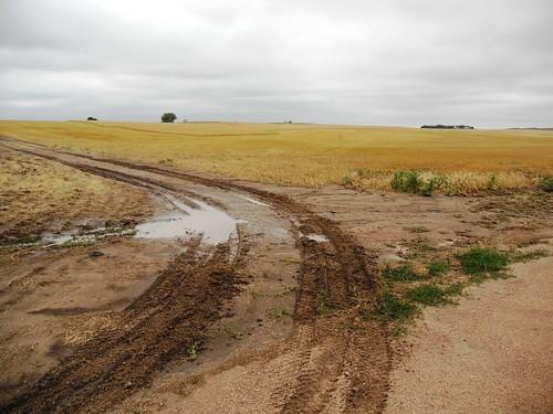 Tracks into field