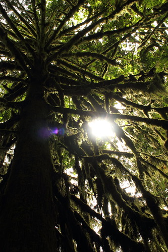 Wandering through Cathedral Grove