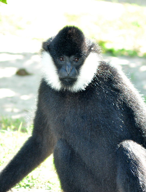 Monkey at the Fort Worth Zoo