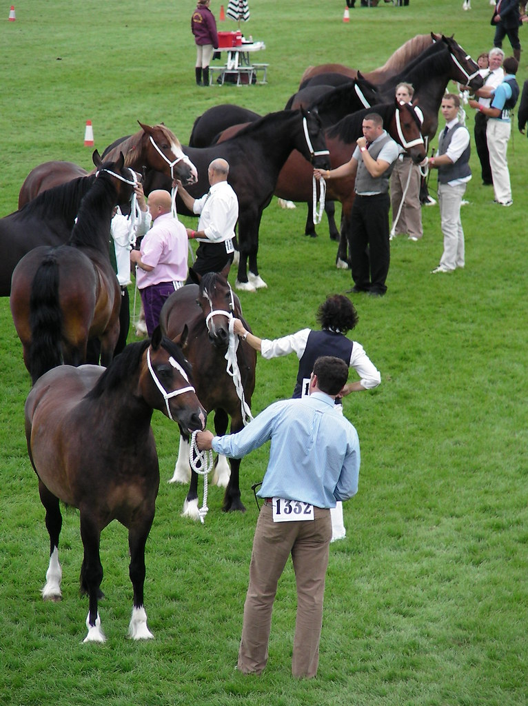 Royal Welsh Show 2011