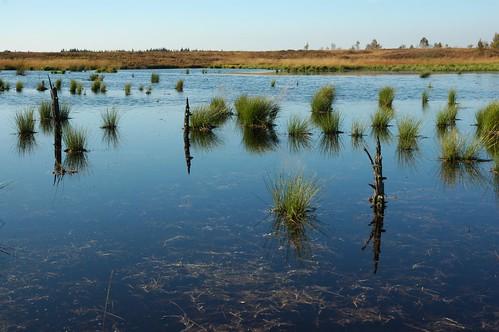 Pond in the Moor/Moortümpel