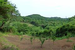 瀬上市民の森(瀬上池方面を臨む)(Segami Community Woods)