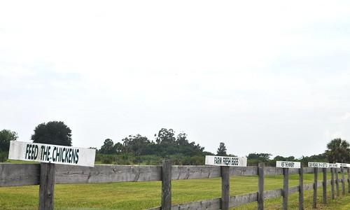 Entrance to Henscratch Farms, Lake Placid, Fla.