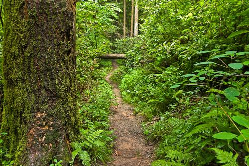 Rock Bridge Trail