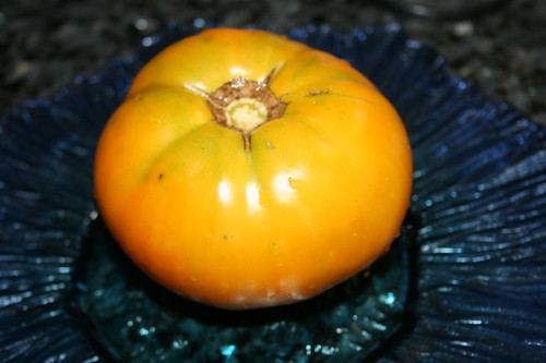 Brandywine heirloom yellow tomato