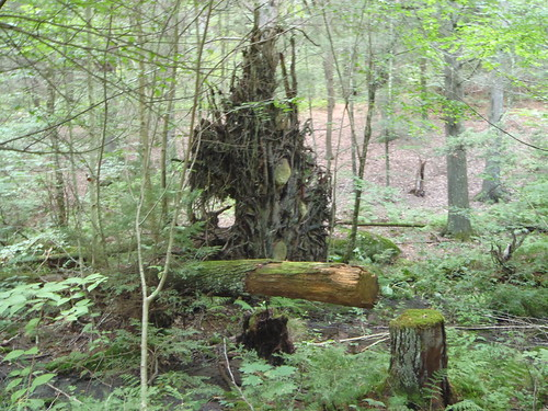 Natchaug State Forest, Connecticut