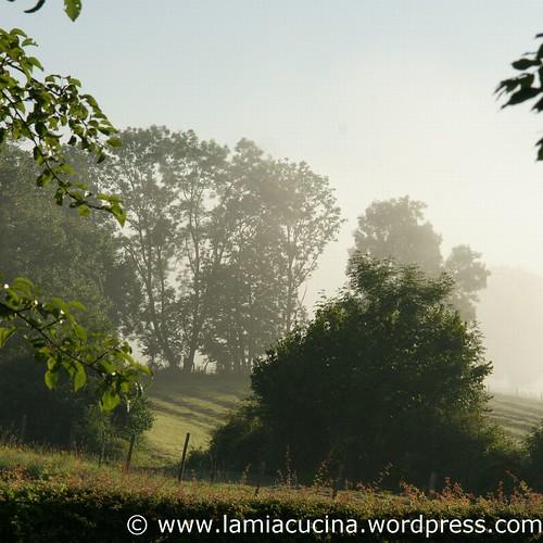 Landleben 2_2011 08 01_5243