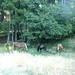 P709025809072011_201247_P7090258